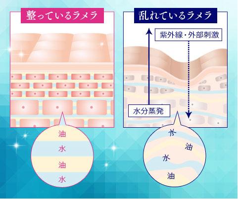 肌のラメラ構造イラスト解説。整っているラメラと乱れているラメラ