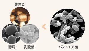 フィト発酵エキスとは