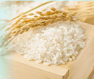稲と米のイメージ写真