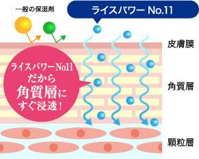 ライスパワーNo.11と一般の保湿剤の角質層への浸透の違いを表すイメージイラスト「ライスパワーNo11だから角質層にすぐ浸透!」