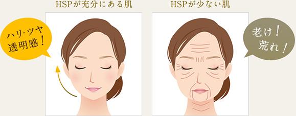 HSPが十分にある肌とHSPが少ない肌