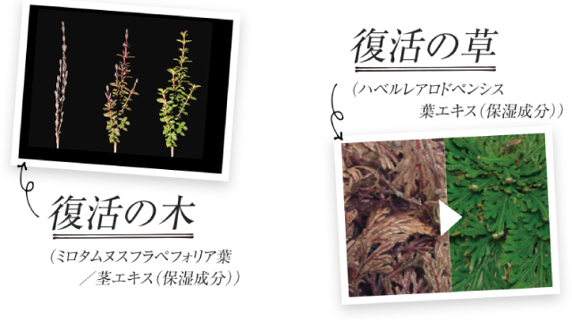 復活の木・復活の草